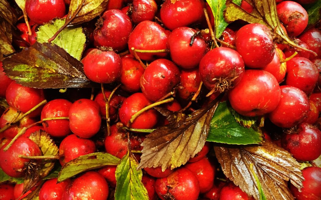 Hawthorn and Cardiovascular Health!