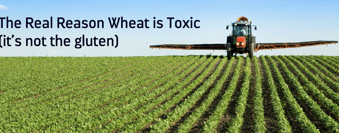 The Real Reason Wheat is Toxic (And It's Not The Gluten)