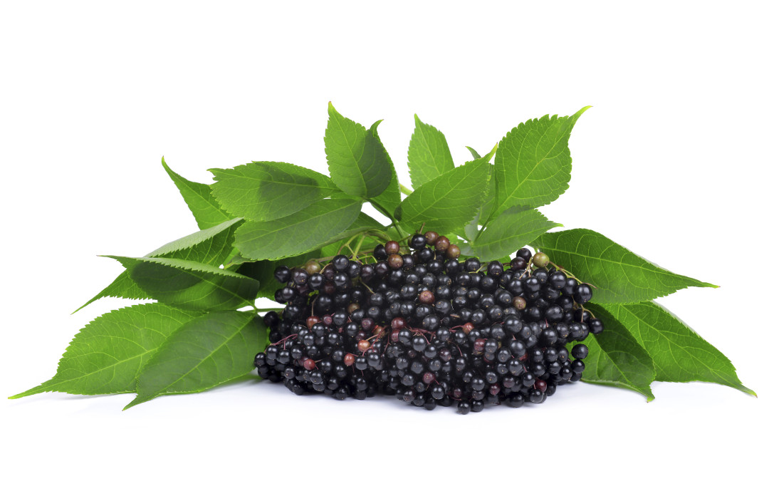 Elderberry Syrup Class! Saturday Nov 14th 3pm